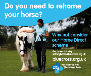 Blue Cross 2020 A (Herefordshire Horse)