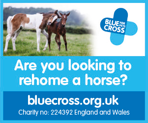 Blue Cross 2020 B (Herefordshire Horse)