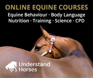 Understand Horses (Herefordshire Horse)